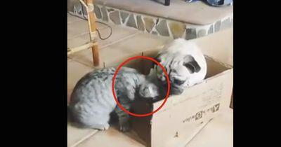 Jedes Mal, wenn der Hund es sich bequem macht, tut die Katze DAS!
