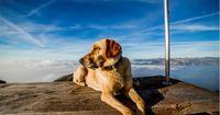 Aufgepasst: Die 6 WICHTIGSTEN Informationen rund um den Haustier-Chip