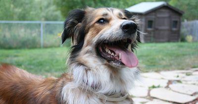 Geheimtipp für Hundehalter: 8 unschlagbare Gründe, warum dein Hund Kokosöl bekommen sollte!