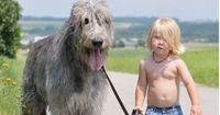 Als sein Hund eingeschläfert wird, sagt dieser Junge etwas Wundervolles!