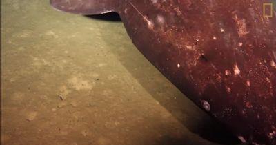 Unglaublich, was Forscher in einem Unterwasservulkan entdeckten!