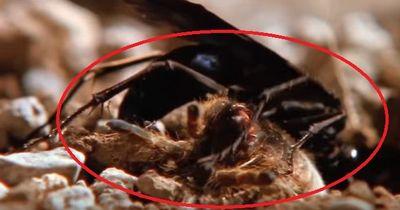 Spinne gegen Wespe - ein Duell auf Leben und Tod!