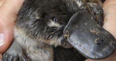 Diese außergewöhnlichen Tiere sind giftig - und du wusstest nichts davon