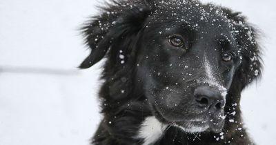 So hat dieser Hund einem Kind das Leben gerettet!