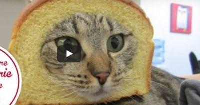 Diese Tier-Videos dauern nur wenige Sekunden und sind sauwitzig