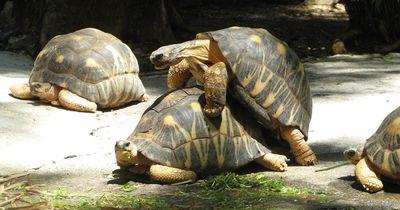 Paarungsrituale im Tierreich – so kompliziert kann es sein