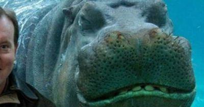 Photobombs: So witzig crashen diese Tiere Fotos
