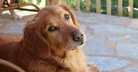 Dieser Hund hat einen unglaublichen Job!