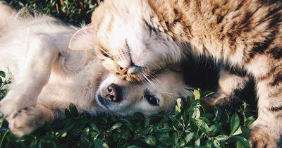 Das sind die ungewöhnlichsten Tierfreundschaften