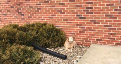 Darum bewegt sich dieser Hund nicht mehr von der Stelle