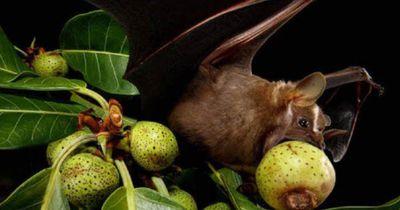 Kennst du schon diese verrückten Tierarten?