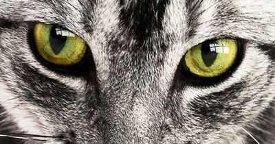 Diese wunderschönen Katzen sind nichts für jedermann