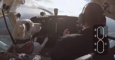 Dieser ehemals obdachlose Hund lernt ein Flugzeug zu fliegen