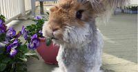 Dieser Hase erobert Instagram