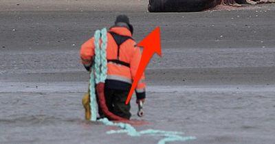 Alarmierend: Schlimmer FUND an der Nordsee-Küste!