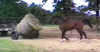 Dieses Pferd hat Hunger - und bespringt deswegen einen Laster!