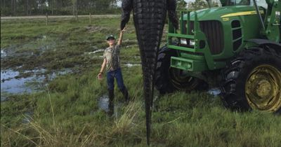 Amerikanischer Farm-Besitzer erlegt Riesen-Alligator
