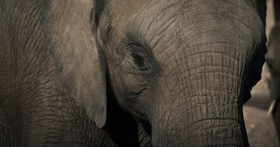 Dieser Elefant freut sich so über seine Befreiung, dass etwas UNGLAUBLICHES geschieht!