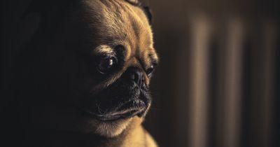 Diese Hundebesitzerin empört momentan alle Tierschützer