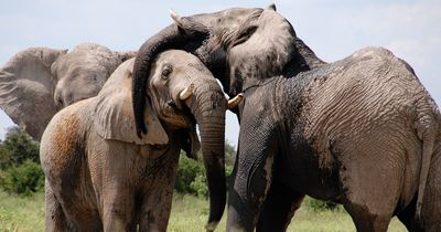 Erstaunliche Entdeckung: Diese Tiere haben menschliche Charakterzüge
