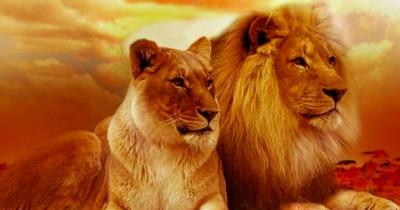 5 Tiere, die ein Leben lang zusammenbleiben