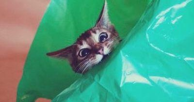 ACHTUNG: Damit darf deine Katze niemals spielen!