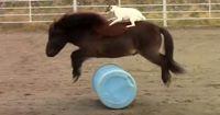 Verrückt: Dieser Terrier kann besser reiten als du!