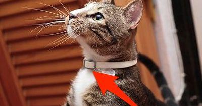 +++Katzenhalter aufgepasst: Diese 6 tödlichen Gefahren lauern im Haushalt!+++