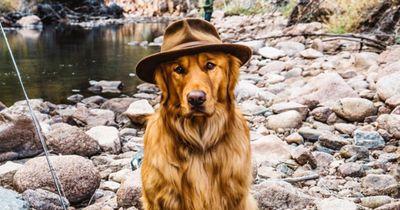 Das ist der wohl fotogenste Hund der Welt