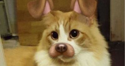 Diese Tiere sind dank Snapchat-Filtern noch niedlicher