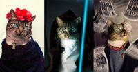 Besitzer macht seine Katze zum Fashion-Victim