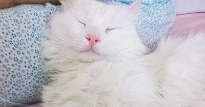 Die Augen dieser Katze werden dich hypnotisieren!