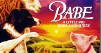 Das wusstest du garantiert noch nicht über die Tiere in deinen Lieblings-Filmen