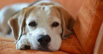 Mit diesen Tipps lernt dein Hund das Alleinesein