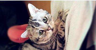Sad Cat: Die traurigste Katze der Welt begeistert die Netzgemeinde