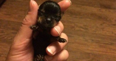 Das ist wohl der winzigste Hund der Welt!