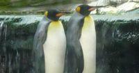 Endlich Ruhe für dieses besondere Pinguinpaar