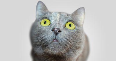 Ist deine Katze zu dick?