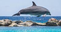 Dieser Delfin bricht aus, um seine Familie zu finden