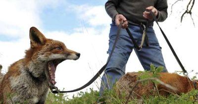Unglaubliche Tierfreundschaft