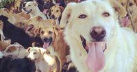 """Das """"Streunerland"""" - Hunde, soweit das Auge reicht"""