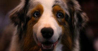 Was DIESER Hund machte, weil er Heimweh hatte: