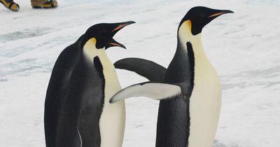 Umwelterschützer schlagen Alarm: Gefahr für Pinguine