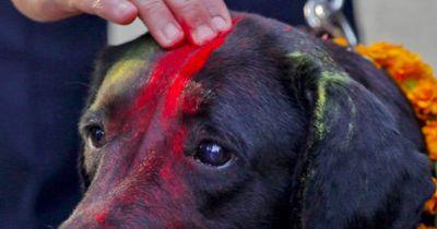 Die Hunde werden mit roter Farbe markiert