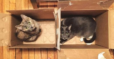 Das große Mysterium: Deswegen lieben Katzen Pappkartons!