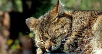 So kannst du deiner Katze einen würdigen Abschied bereiten