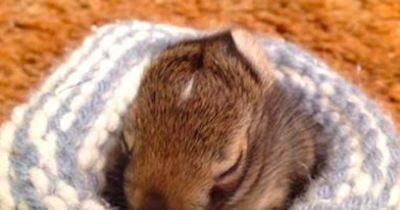 Kuscheliges Nest für Baby-Hasen