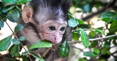 Dieser Babyaffe musste den Mord an ihrer Mutter miterleben