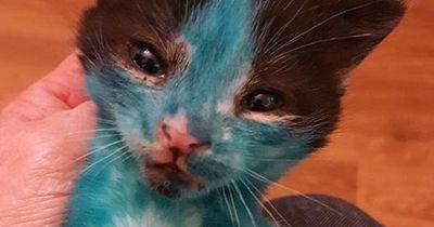 Tierquäler färben Baby-Katzen