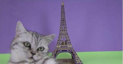 Diese Katzenhäuschen brauchst du unbedingt